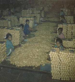 Child labour in a state owned biscuit factory